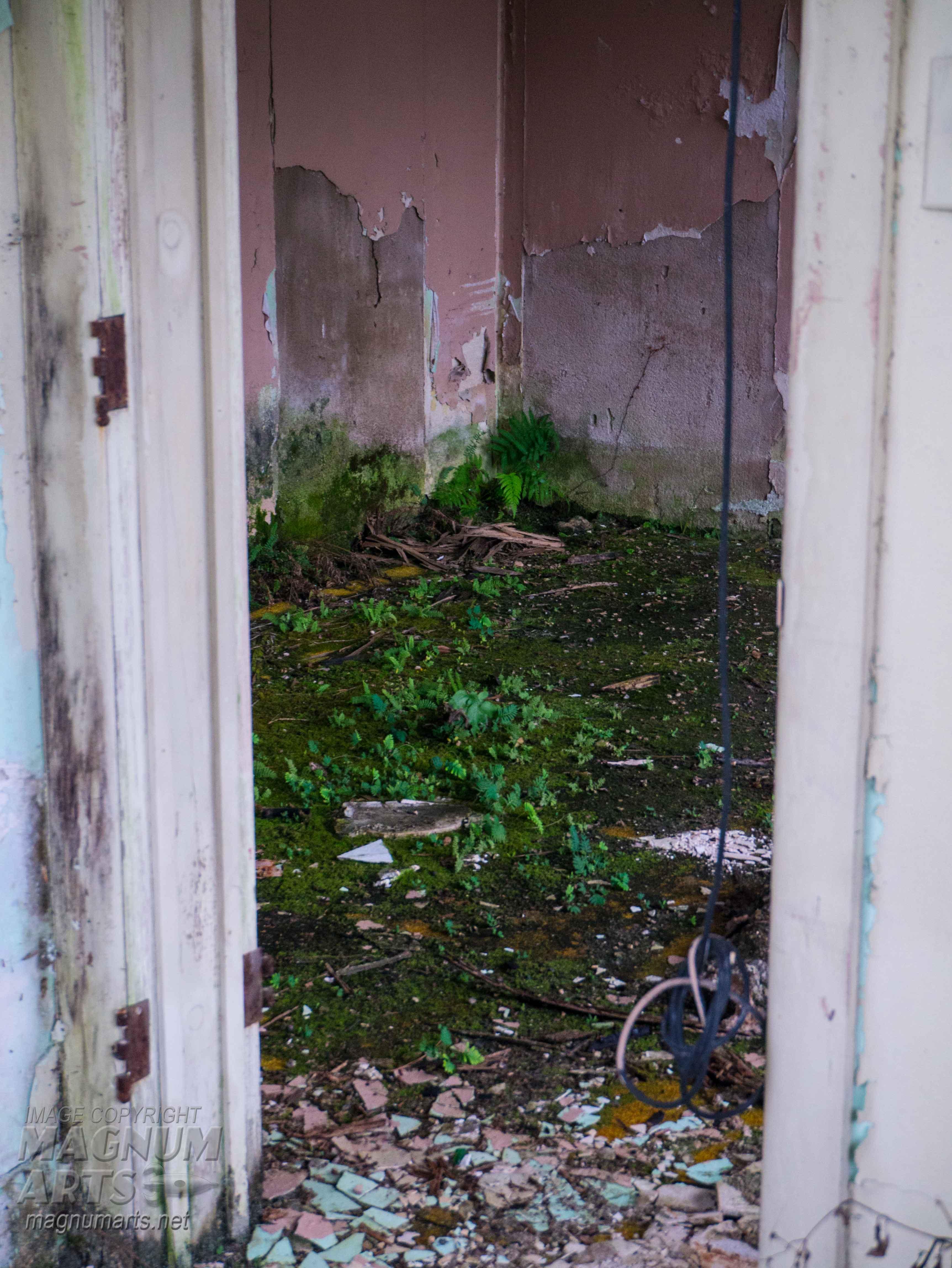 Overgrown room 1